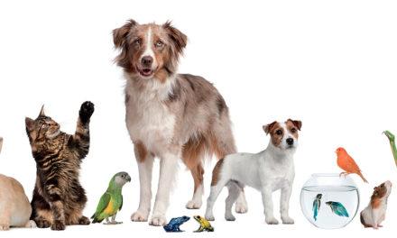 Save the pet. Amici degli animali: per raccogliere fondi, raccontiamoci bene.